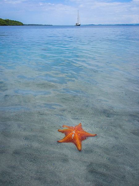 Unique Starfish Beach Photography By Messagez com