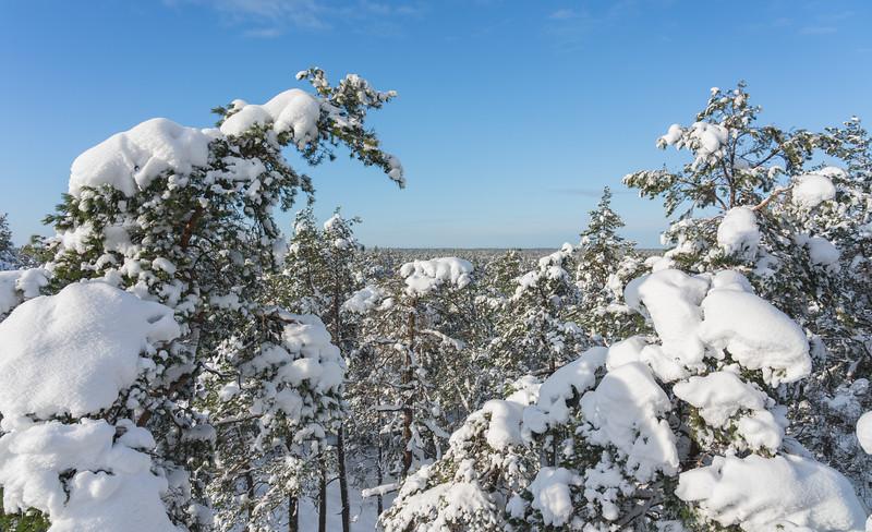 Fluff-Snow