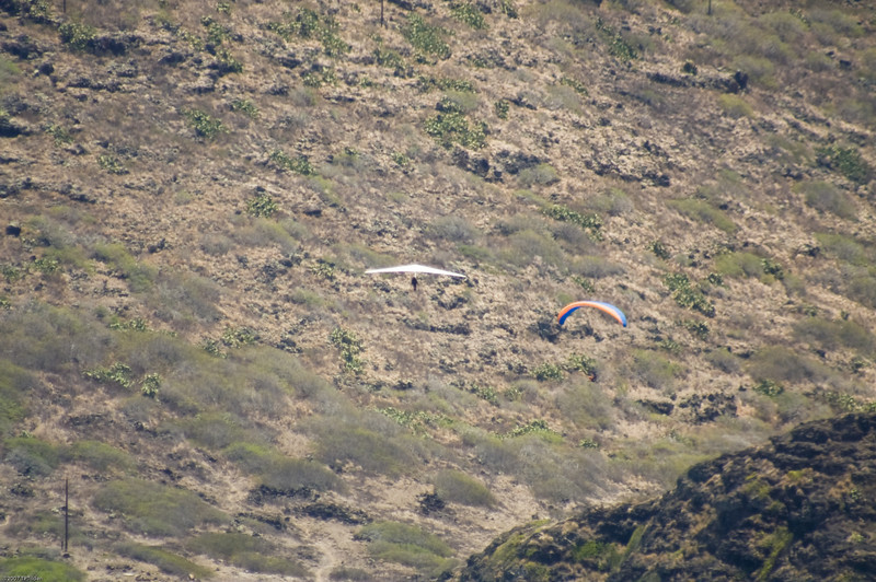 Paragliders  and Hang Gliders over Makapuu-15