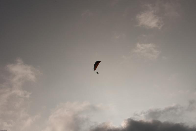Voggy flying-1