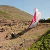 Paragliders at play-195