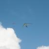 Paragliders at Makapuu-72