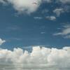 Makapuu Landings-77