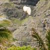 Goats watch Doug-22