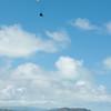Paraglider Window-16