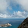 Paragliding Invasion-145
