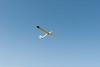 Light for gliding-8