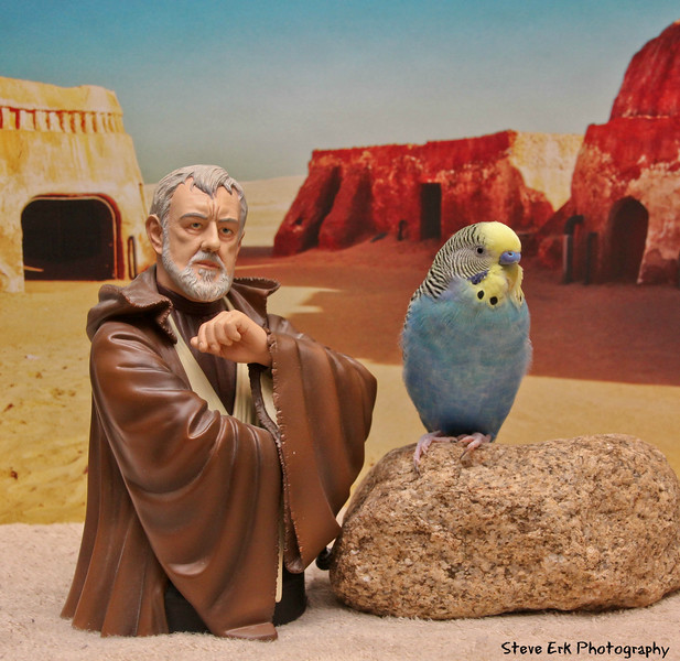 Fishstyck goes to Tatooine to learn the force from Obi Wan