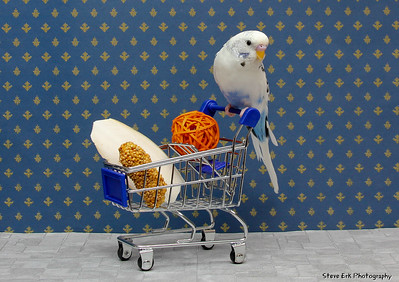 Milkdud doing some shopping