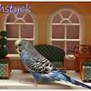 Fishstyck