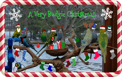 A Very Budgie Christmas