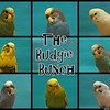 The Budgie Bunch
