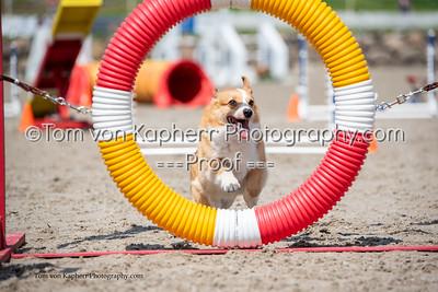 Defi Royal Canin Challenge