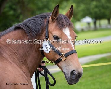 Tom von Kapherr Photography-0791