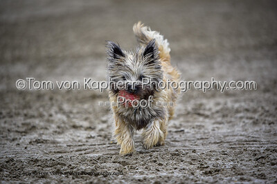 Tom von Kapherr Photography-0376