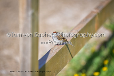 Tom von Kapherr Photography-9280