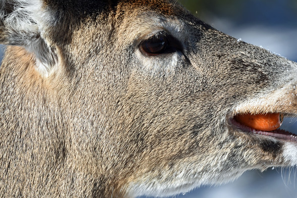Parc Omega Feb 14 2016 Valentines Day