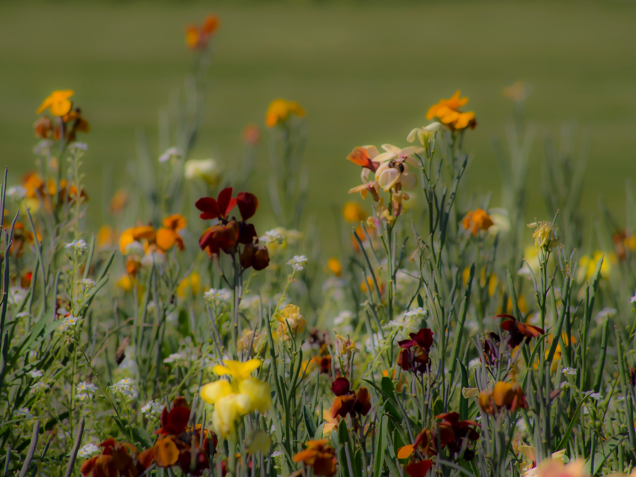Wildflowers at Luxembourg Gardens Paris