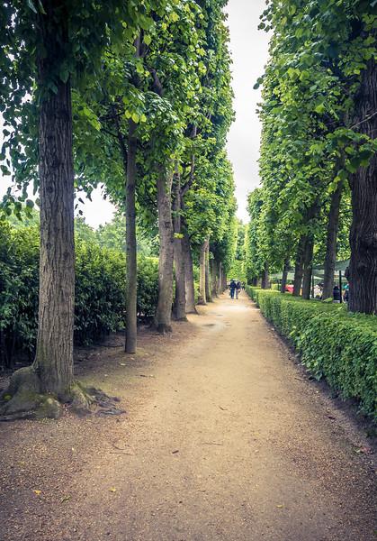 Luxembourg Gardin tree lined path