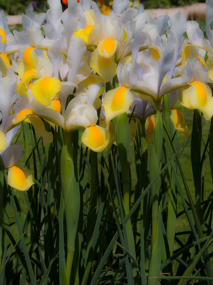 Flowers at Jardin des Plantes Paris