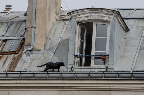 Cat climbing in an open rooftop window -- Menilmontant, Paris
