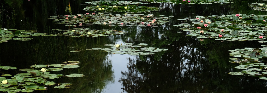 . The lily pond at Claude Monet\'s house Giverny, France.  Monet, the founder of French Impressionist Painting lived here place from 1883 until his death in 1926. Many of his paintings were painted in Giverny, the village where his home is located, especially in his own gardens.  Photo by Shmuel Thaler