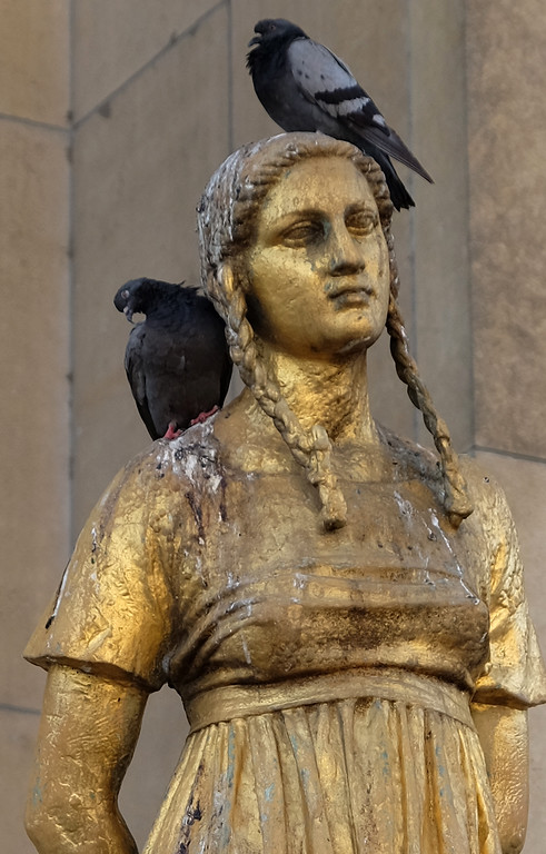 . Pigeons on a statue in the Trocadero in Paris. Photo by Shmuel Thaler