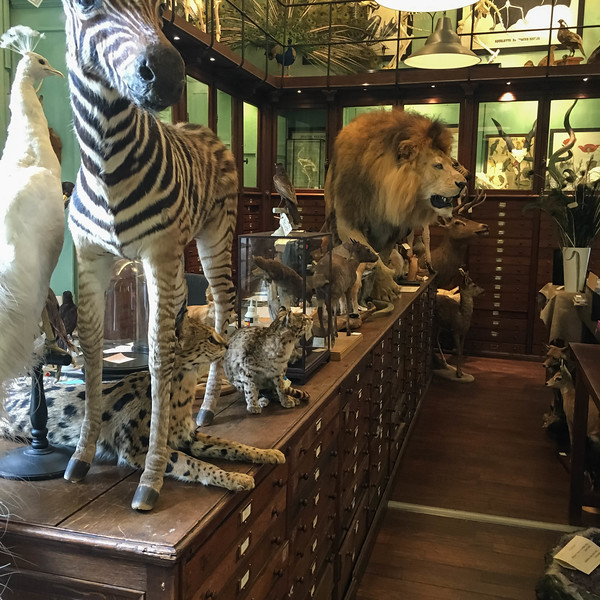 Strange store that sold animals as home accessory pieces.