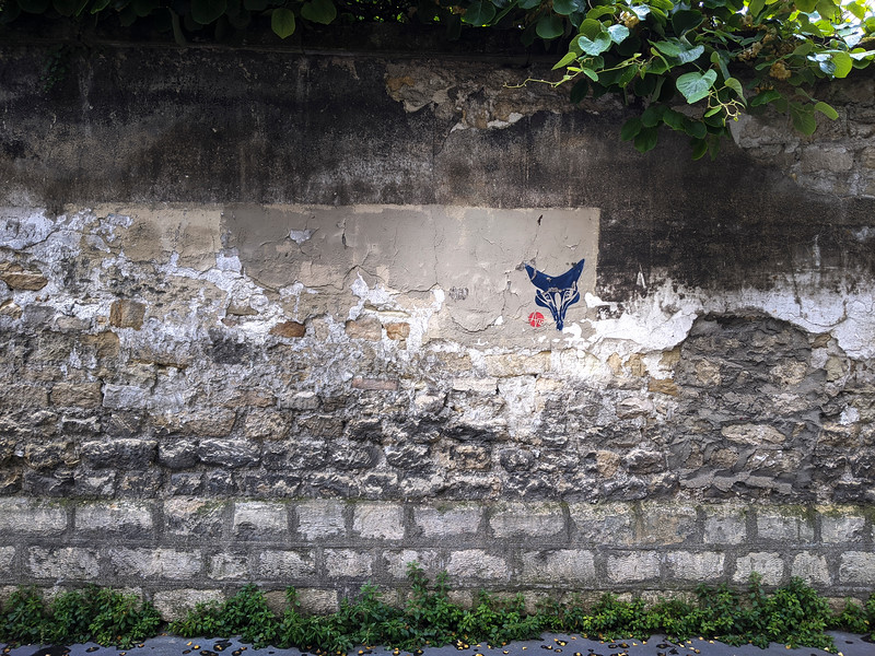 Faune murale. Mai 2020