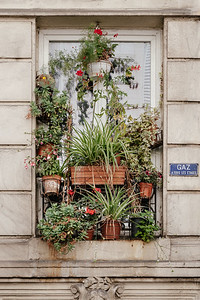 Plants on the window in Paris