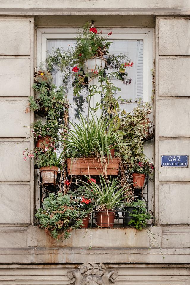 Plants on the window in Paris