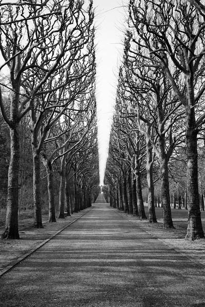 Tree Allée