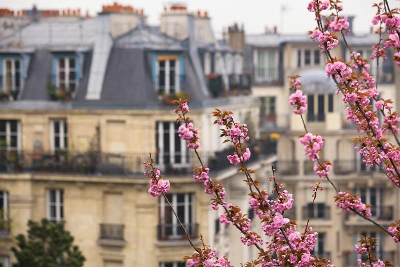 Paris Spring Blossoms