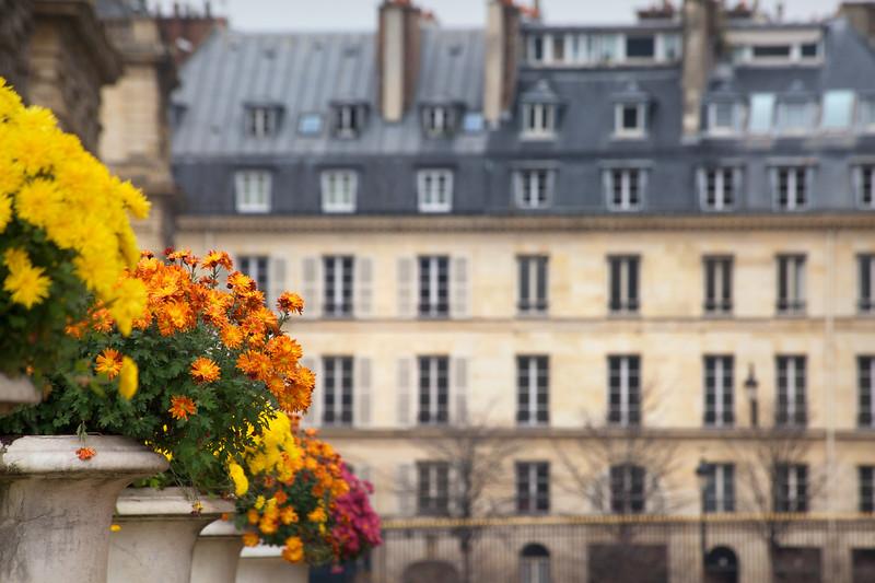 Paris Autumn Flowers