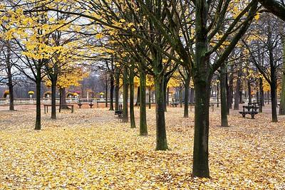 Paris Luxembourg Garden Autumn Leaves