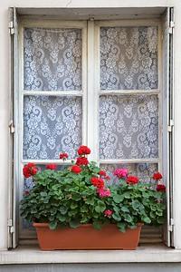 Paris Geraniums and Lace