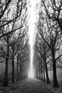 Tree Allée in Fog 2