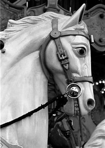 Carousel horse, Montmartre