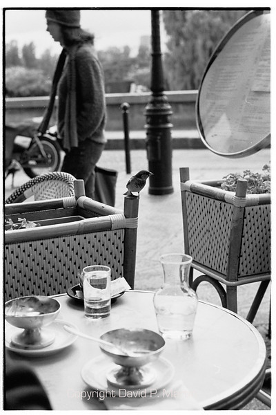 A sparrow looks for crumbs in an outdoor cafe.