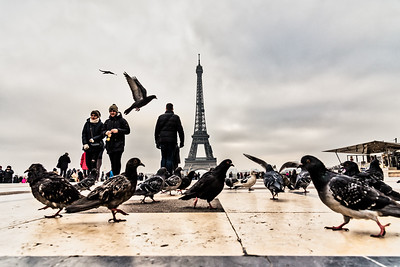 Pigeons and Eiffel Tower.