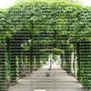 Green garden arches in Paris