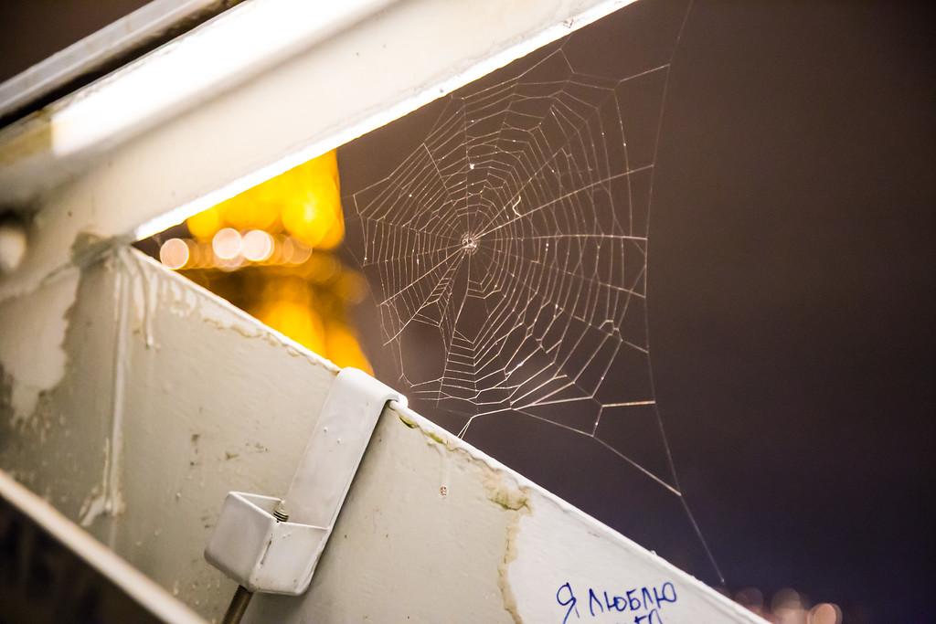 Spiderweb on Bridge in Paris