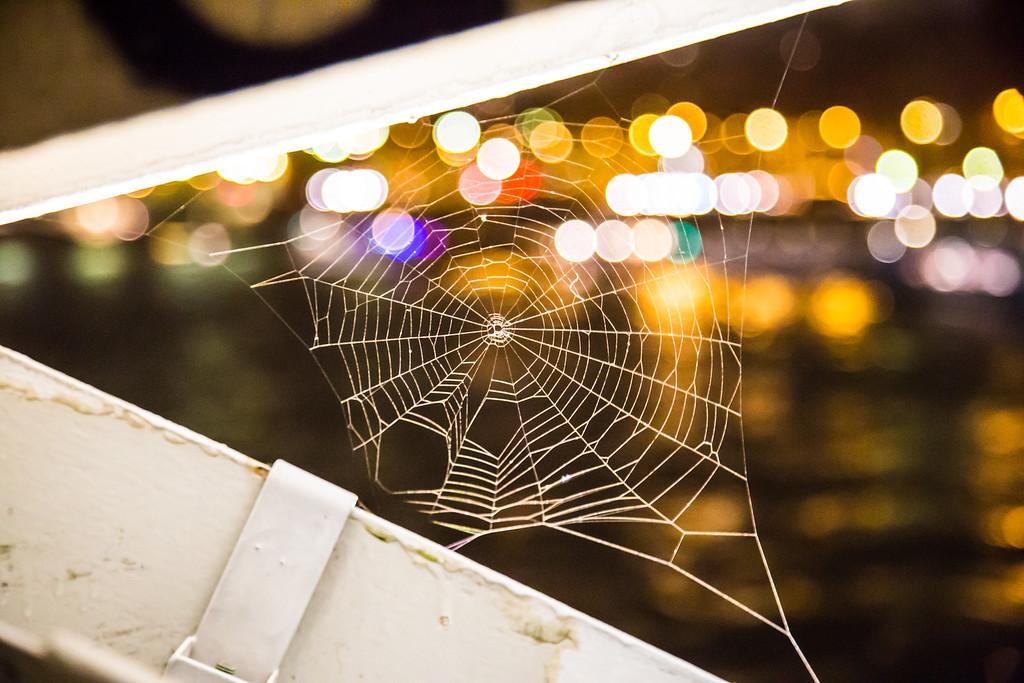 Spiderweb in Paris France