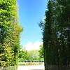 Versailles Gardens 5