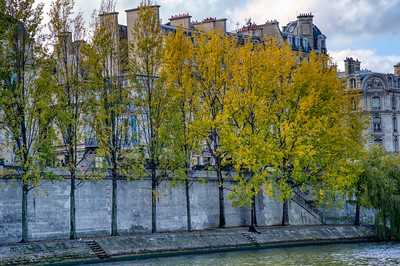 Changing Trees of the Seine