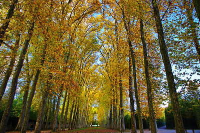 Paris_Versailles_Fall-trees_RAW7390