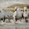 WILD WHITE HORSES OF THE CAMARGUE I
