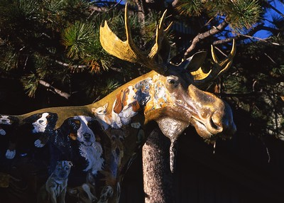 Dog Moose