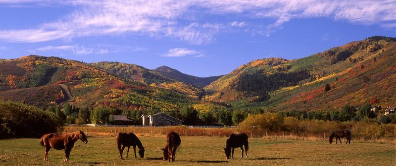 Horses - Thaynes Canyon