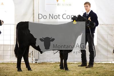 montana ag-11